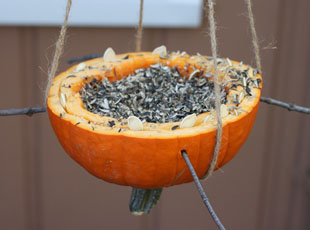 Ways to Recycle your Decorative Squash this Season