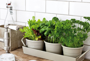 5 Tips to Maintain your Indoor Herb Garden
