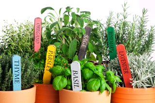 Fresh Summer Flavors—How to Grow Your Own Herbs